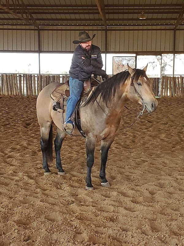 ranch-work-quarter-horse