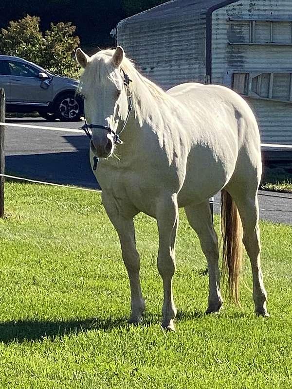 stee-quarter-horse