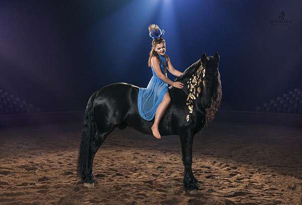 black-kfps-stallion