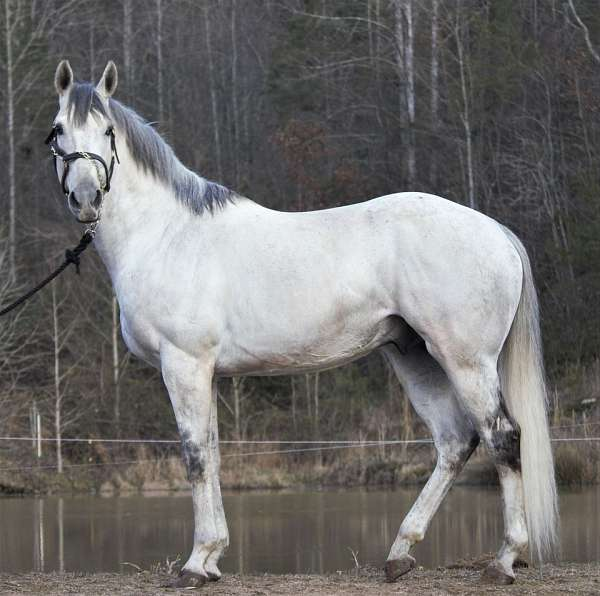 grey-2-hind-stockings-horse
