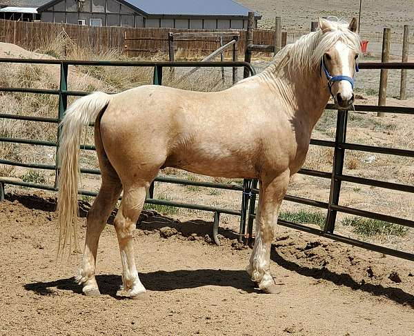blaze-off-whites-horse