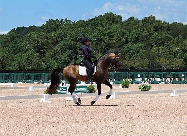 buckskin-lusitano-horse
