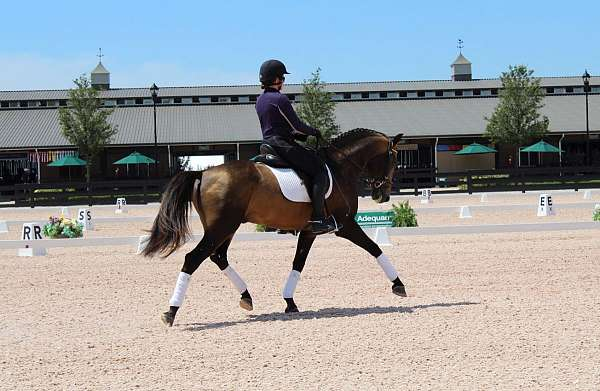 stud-service-lusitano-horse