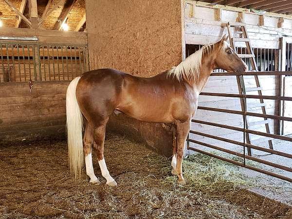 tan-horse