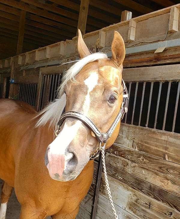 tan-stallion