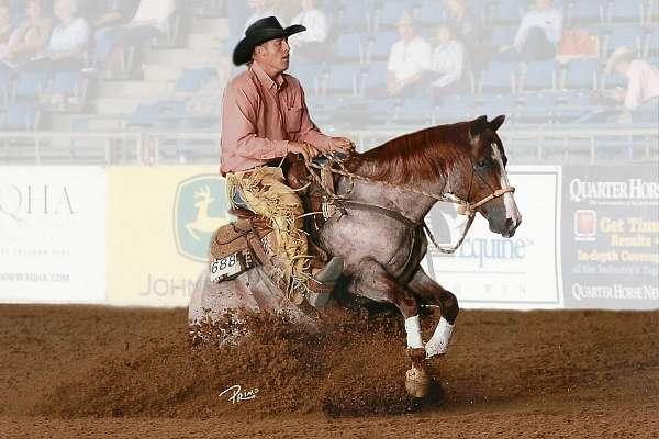 red-roan-quarter-horse
