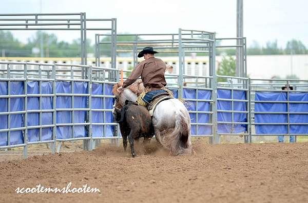 reined-cow-horse-quarter