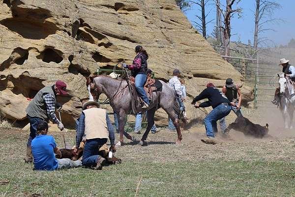 bet-yer-boons-quarter-horse