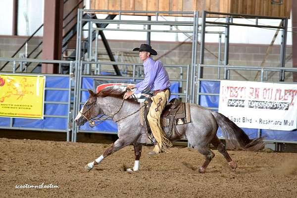 register-of-merit-quarter-horse