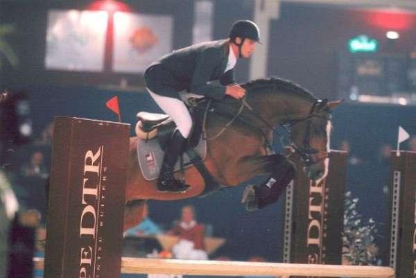 jumper-stallion-dutch-warmblood-horse