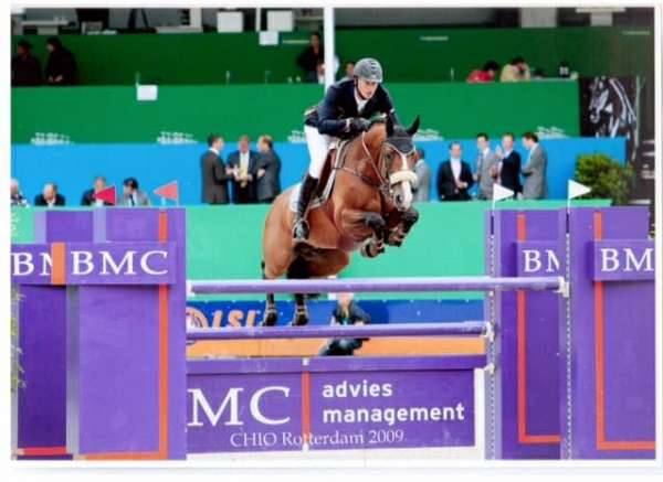 grand-prix-jumper-dutch-warmblood-horse