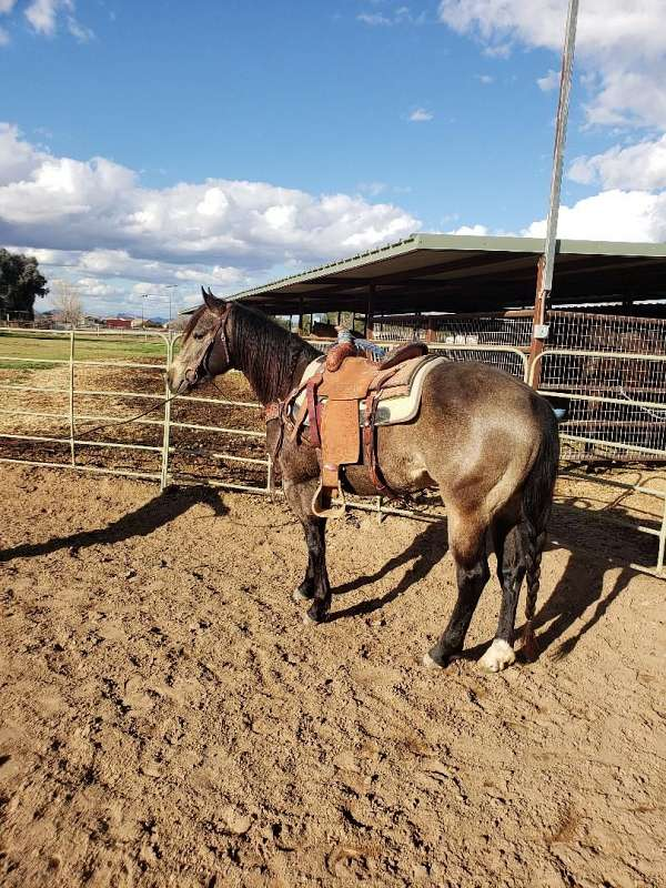 pedigree-horse