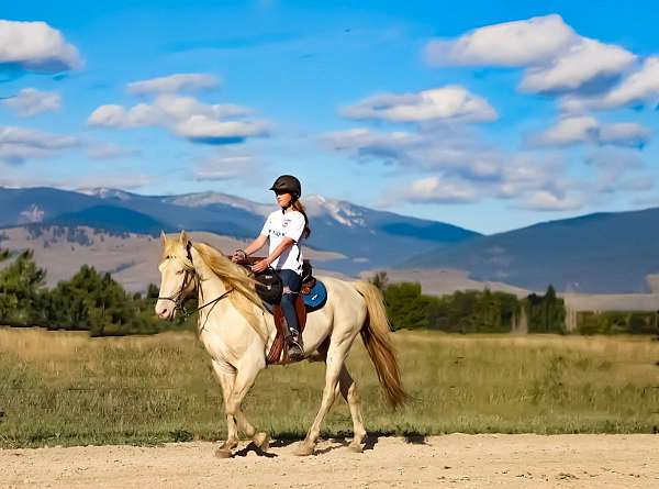 other-rocky-mountain-horse
