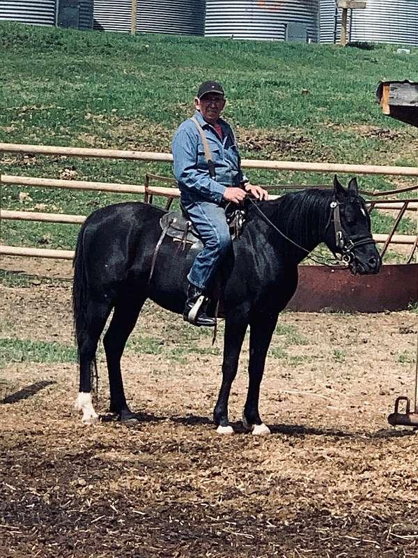 rthind-leg-horse