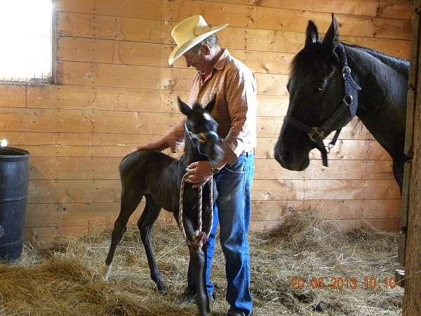 black-rtfore-leg-horse