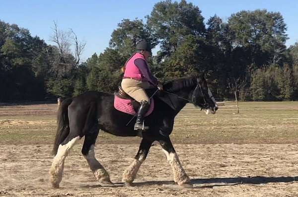 dressage-clydesdale-horse