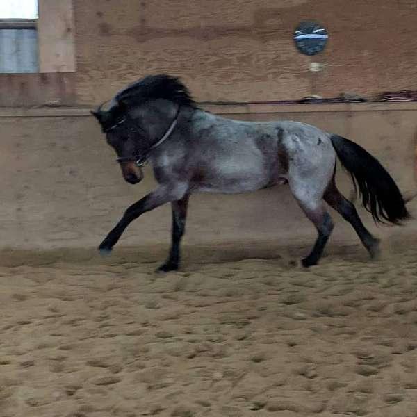 white-coronet-band-horse