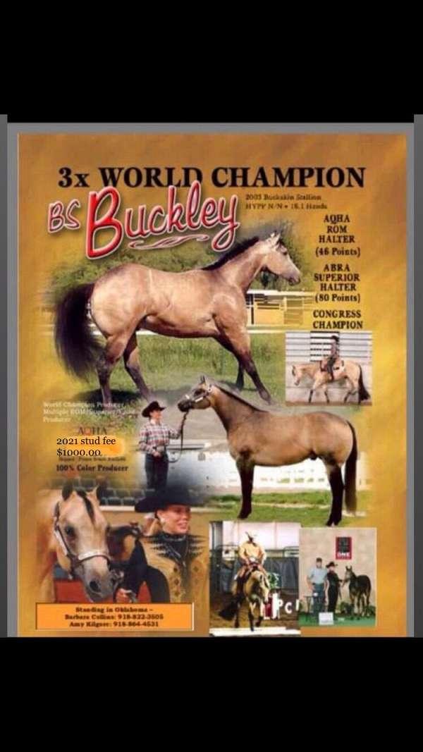 events-quarter-horse