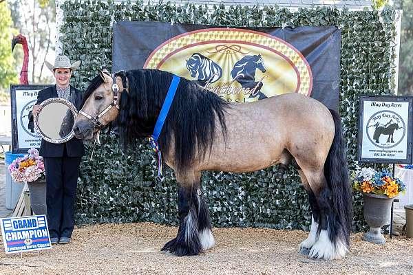 buckskin-star-3-white-socks-horse
