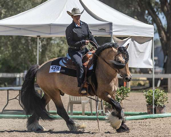 color-producer-gypsy-vanner-horse