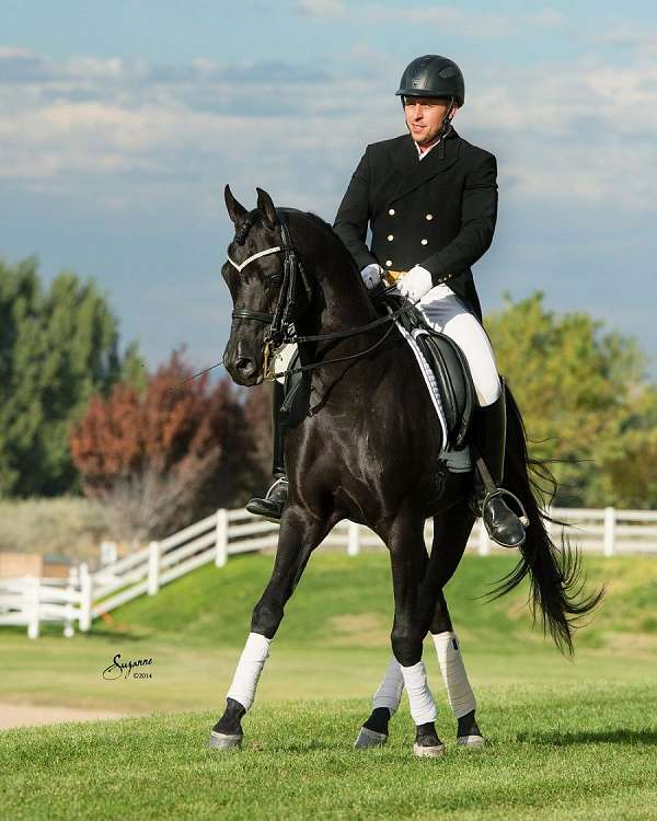 cross-arabian-horse
