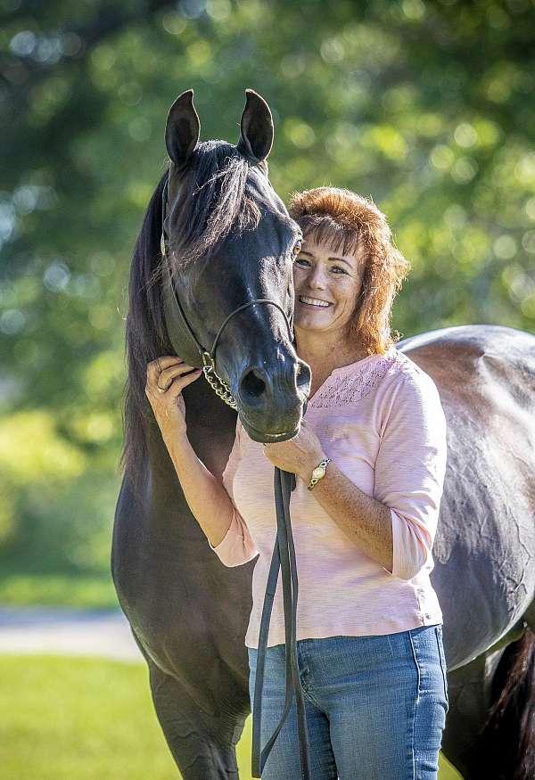dressage-halter-arabian-horse