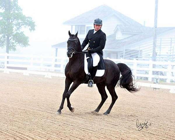 retirement-horse