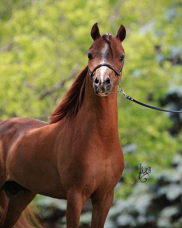 strip-4-white-socks-horse