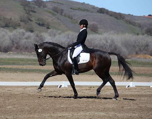 bay-english-horse