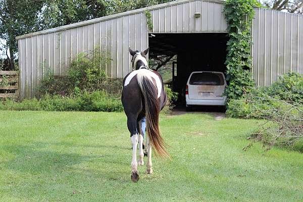 black-jumper-horse