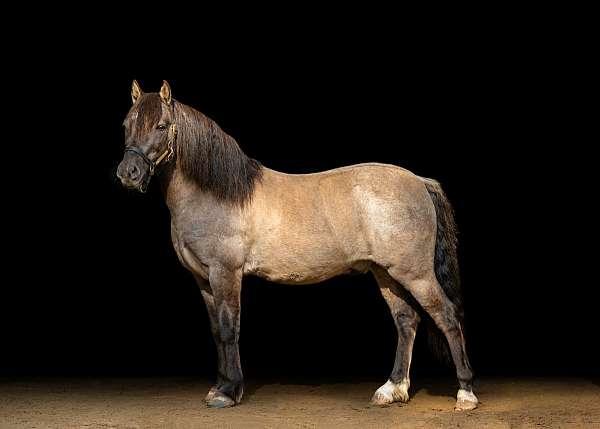 two-white-pasterns-pony