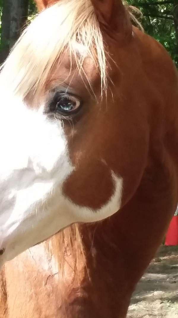 quarter-horse-stallion