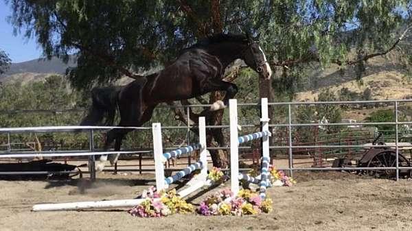 westphalian-stallion