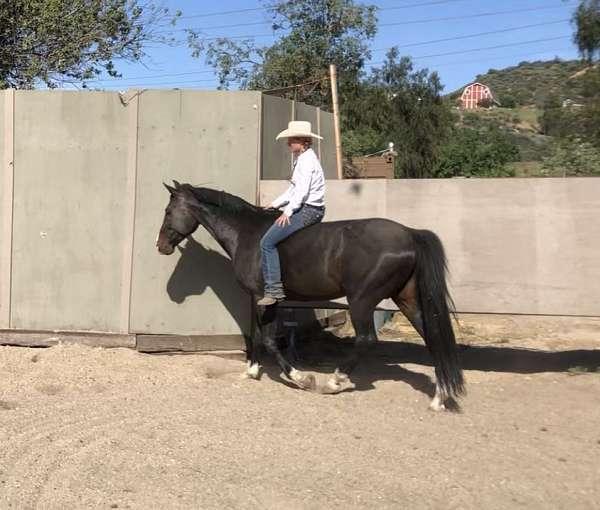 jumper-hanoverian-horse