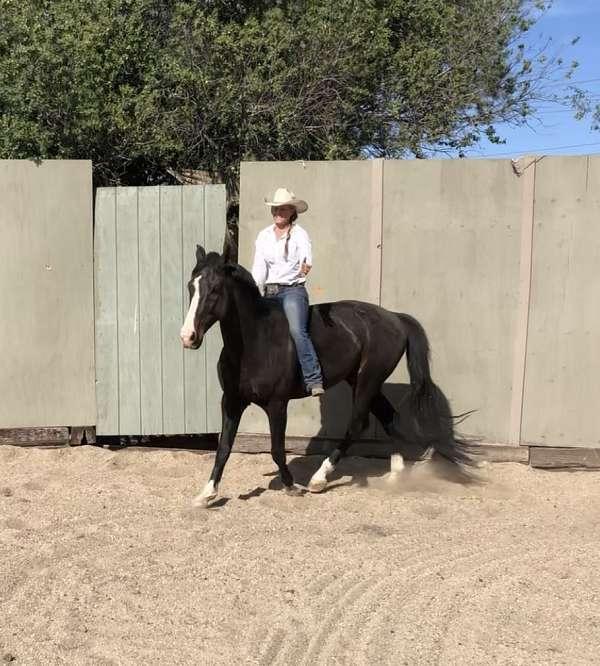 black-eventing-horse