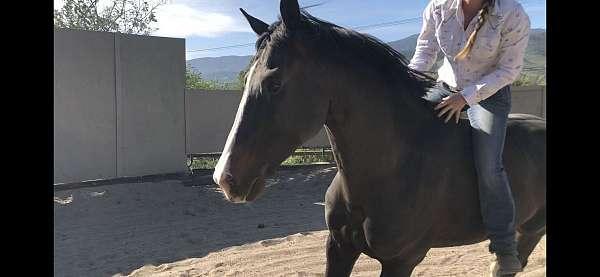 homozygous-black-hanoverian-horse