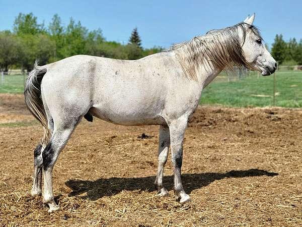 grey-equitation-horse