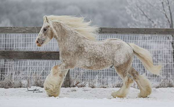palomino-spotted-horse