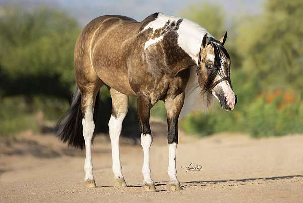 buckskin-homozygous-black-horse