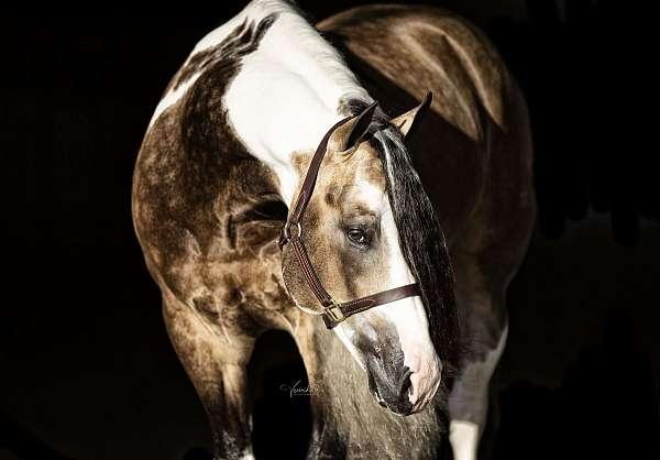 buckskin-money-winner-horse