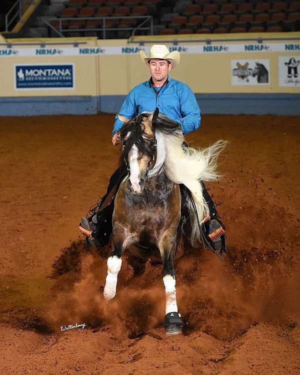 buckskin-apha-stallion
