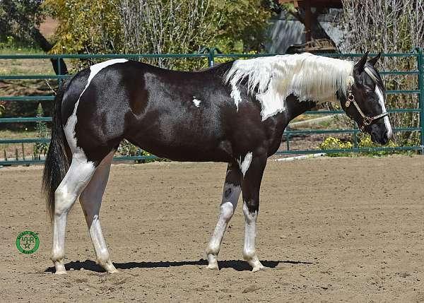 apha-stallion