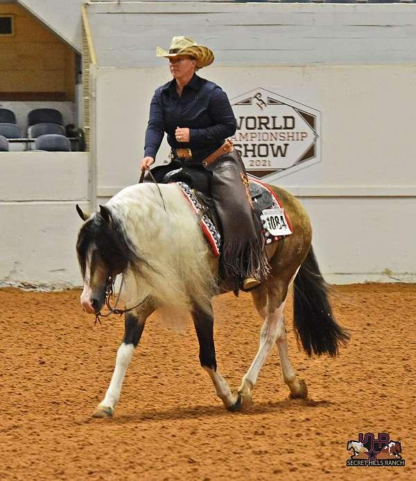apha-paint-stallion