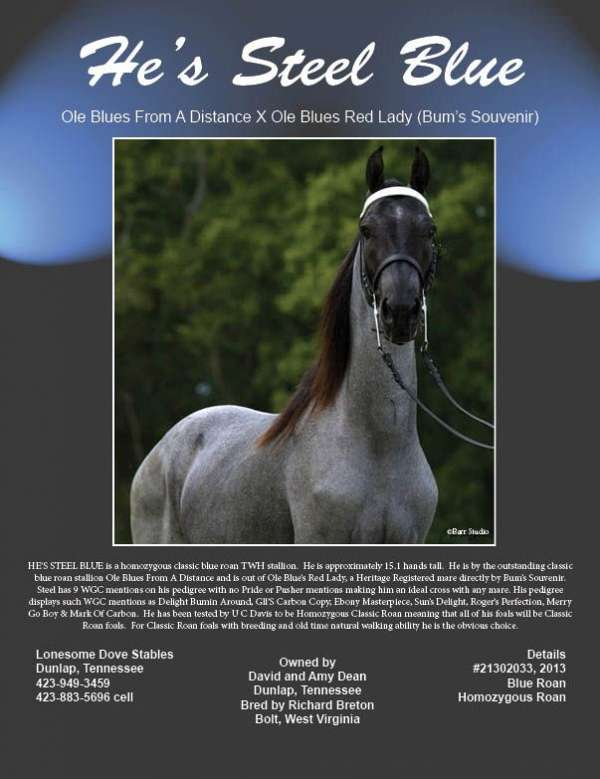 few-white-hairs-in-forehead-horse
