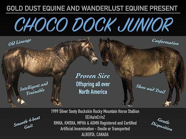 all-around-rocky-mountain-horse