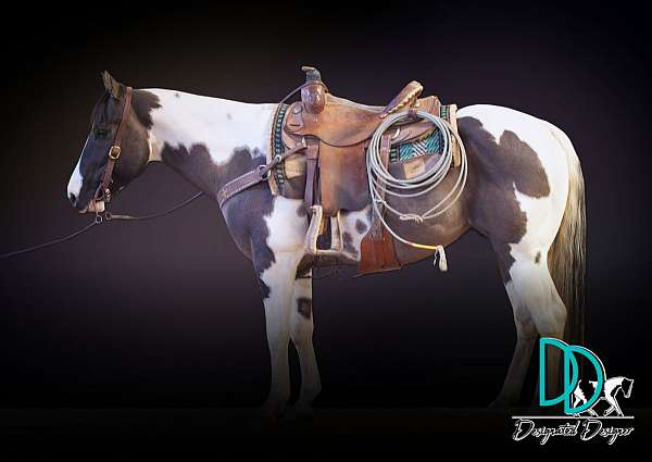 paint-stallion