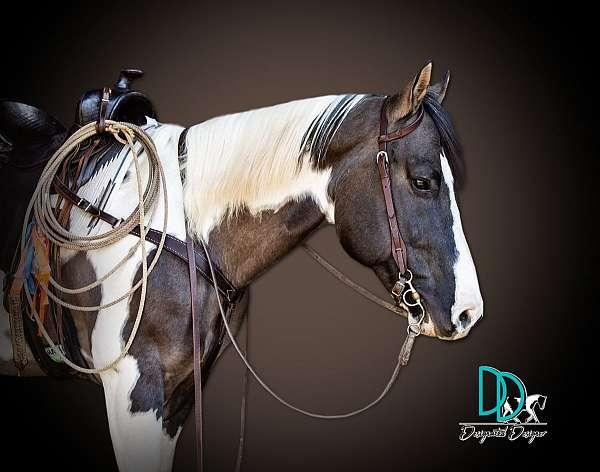 tobiano-reining-horse