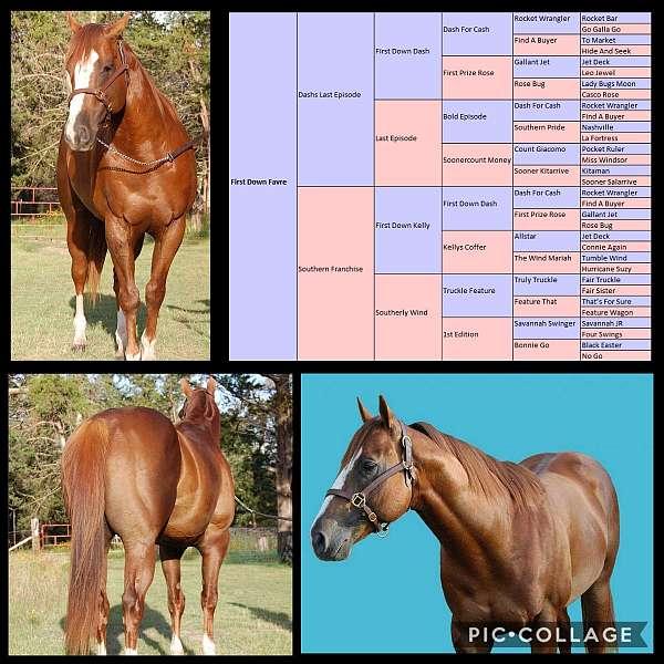 chestnut-chromed-out-horse