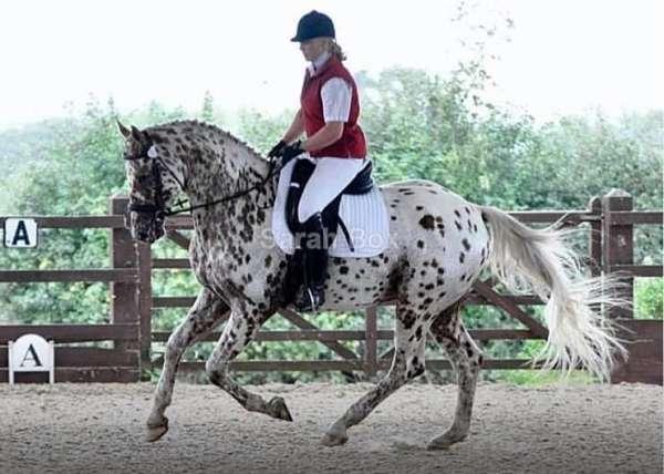 full-leopard-spot-horse