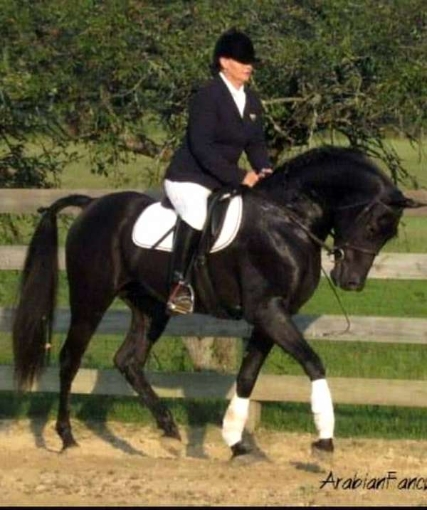 black-solid-horse